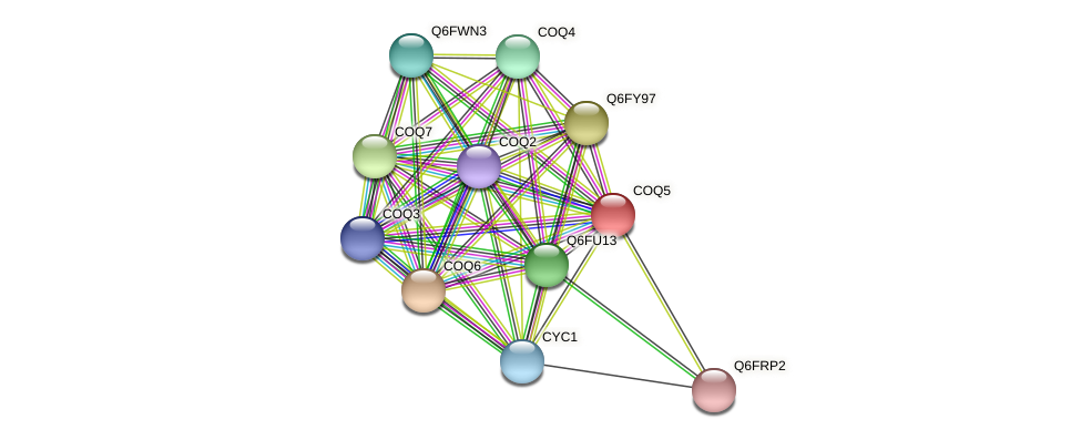 XP_447997.1 protein (Candida glabrata) - STRING interaction network