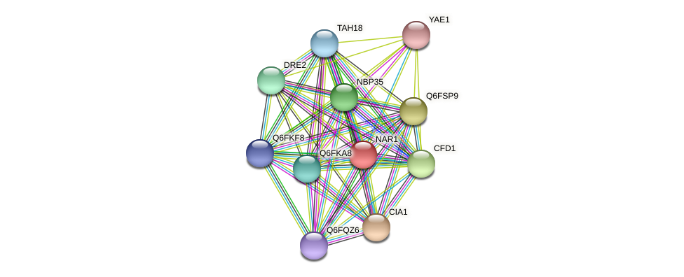 NAR1 protein (Candida glabrata) - STRING interaction network