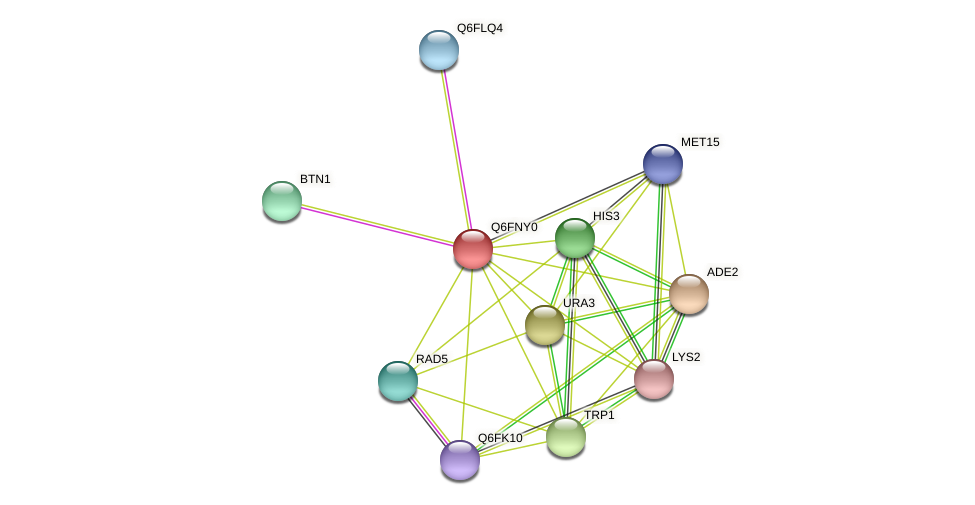 XP_448064.1 protein (Candida glabrata) - STRING interaction network