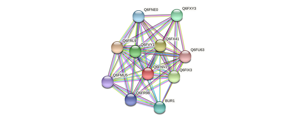 XP_448092.1 protein (Candida glabrata) - STRING interaction network