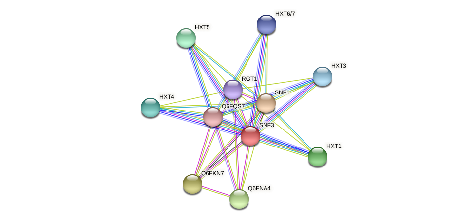 XP_448101.1 protein (Candida glabrata) - STRING interaction network