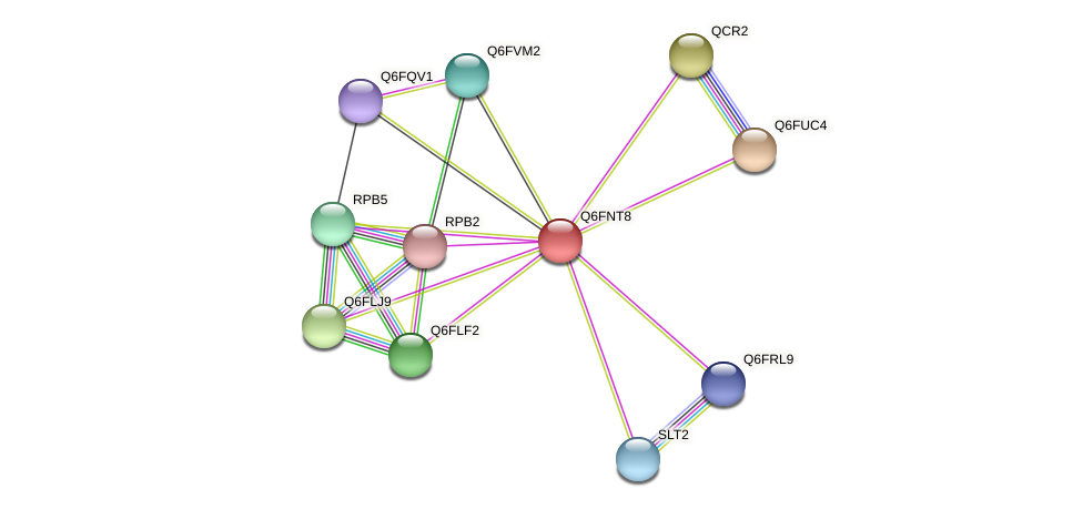 XP_448106.1 protein (Candida glabrata) - STRING interaction network