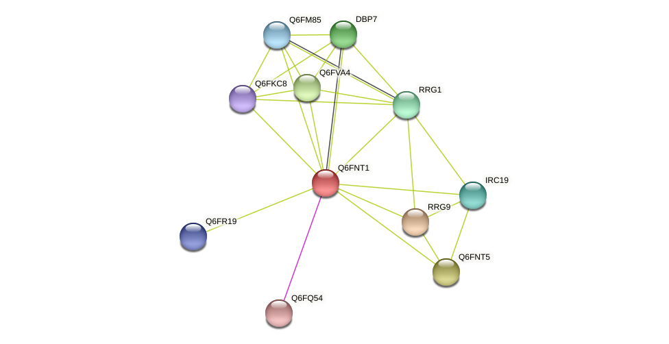 XP_448113.1 protein (Candida glabrata) - STRING interaction network