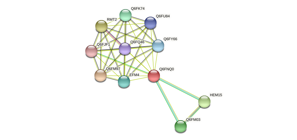 XP_448144.1 protein (Candida glabrata) - STRING interaction network