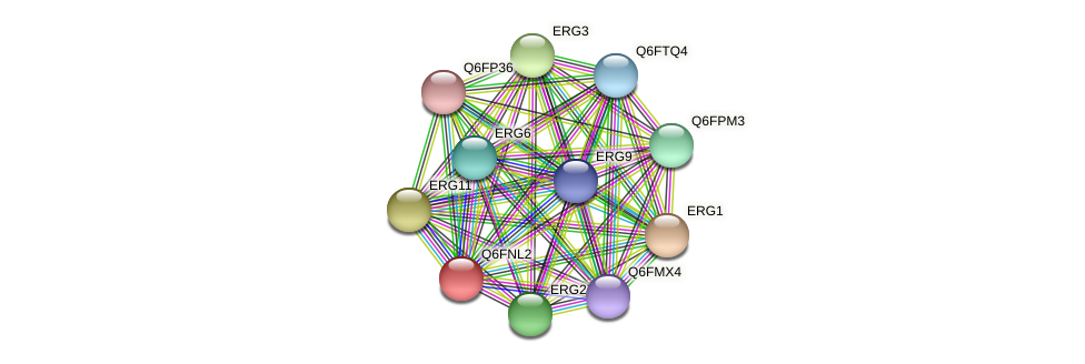 XP_448182.1 protein (Candida glabrata) - STRING interaction network