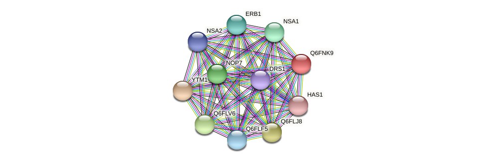 XP_448185.1 protein (Candida glabrata) - STRING interaction network