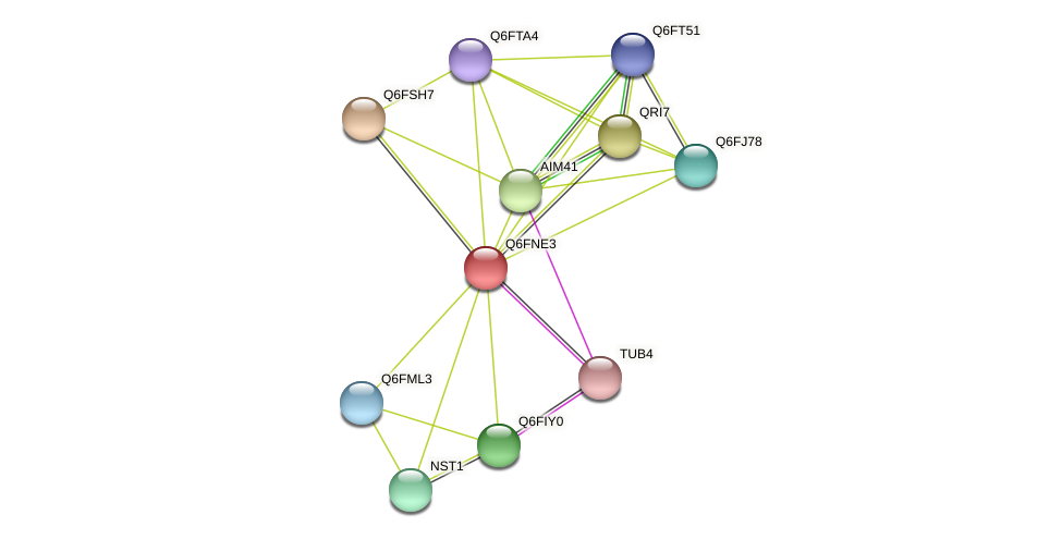 XP_448251.1 protein (Candida glabrata) - STRING interaction network