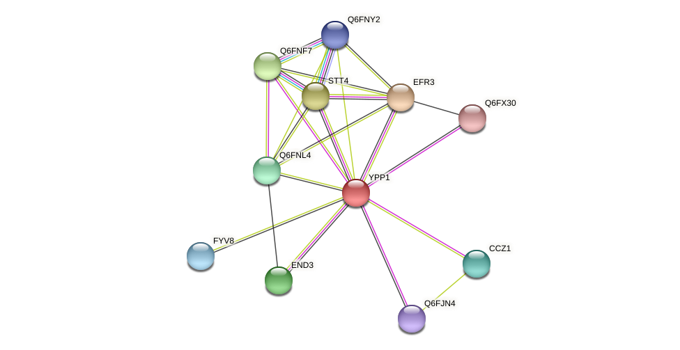 YPP1 protein (Candida glabrata) - STRING interaction network