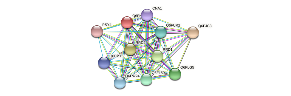 XP_448282.1 protein (Candida glabrata) - STRING interaction network