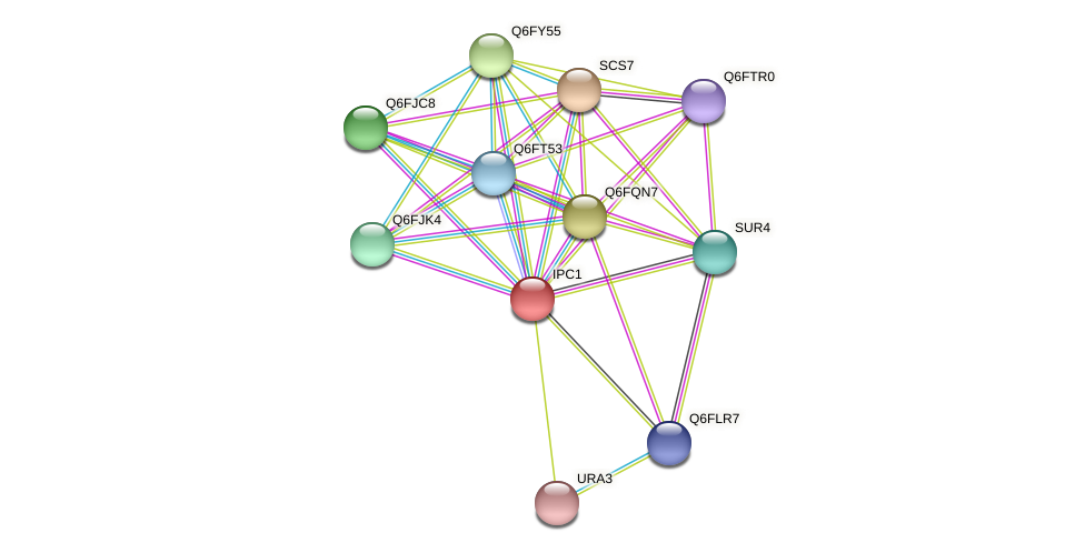 IPC1 protein (Candida glabrata) - STRING interaction network