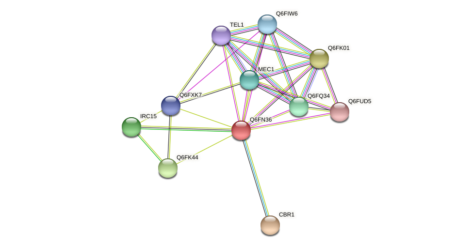 XP_448358.1 protein (Candida glabrata) - STRING interaction network