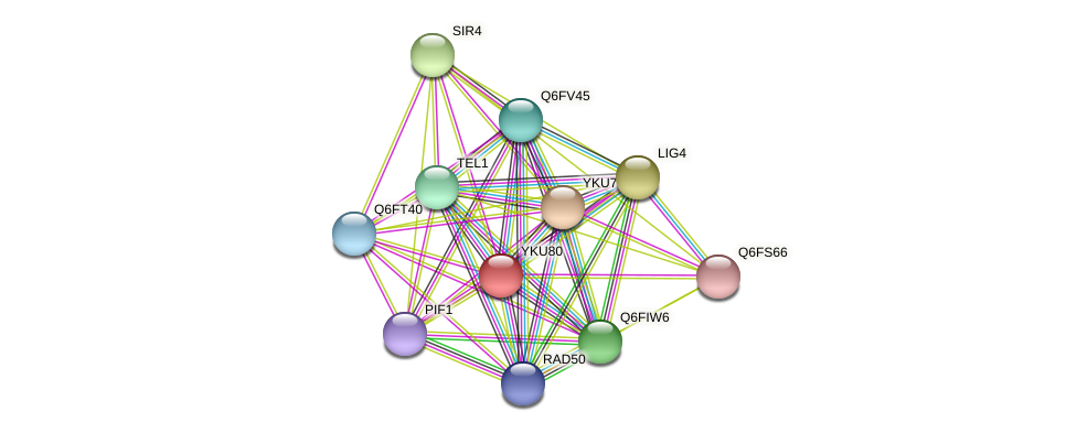 YKU80 protein (Candida glabrata) - STRING interaction network
