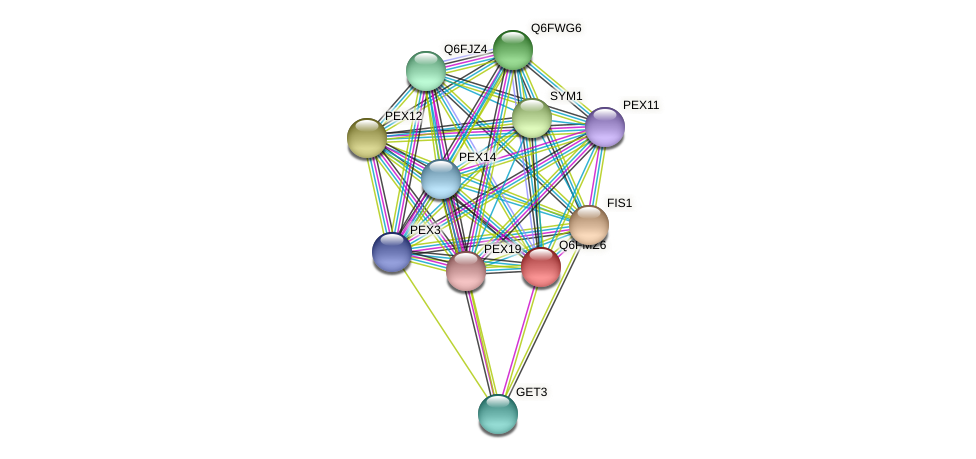 XP_448398.1 protein (Candida glabrata) - STRING interaction network