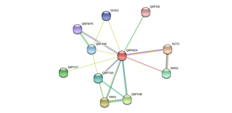XP_448400.1 protein (Candida glabrata) - STRING interaction network