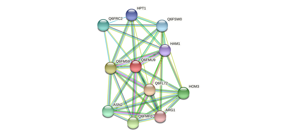 XP_448445.1 protein (Candida glabrata) - STRING interaction network
