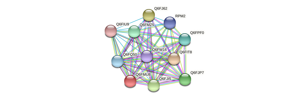 XP_448446.1 protein (Candida glabrata) - STRING interaction network