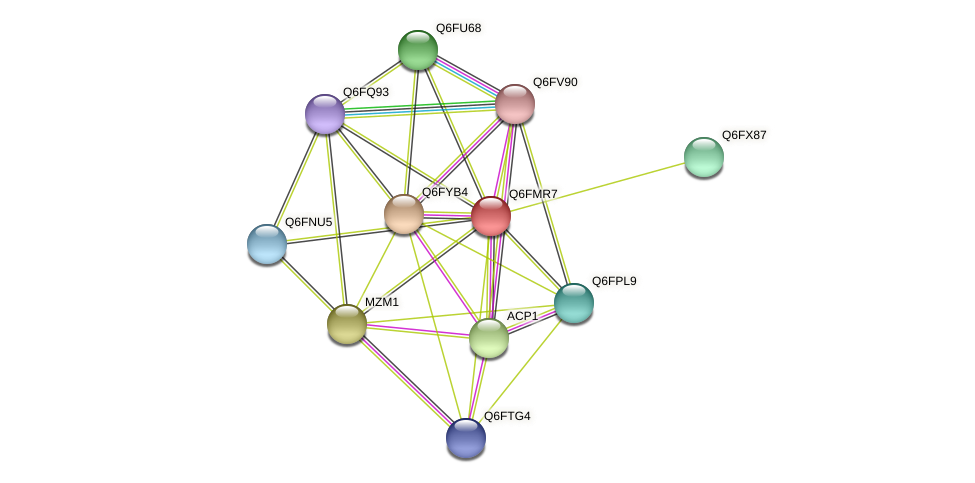 XP_448477.1 protein (Candida glabrata) - STRING interaction network