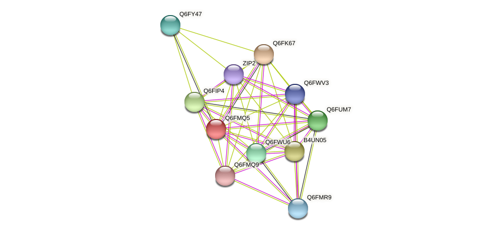 XP_448489.1 protein (Candida glabrata) - STRING interaction network