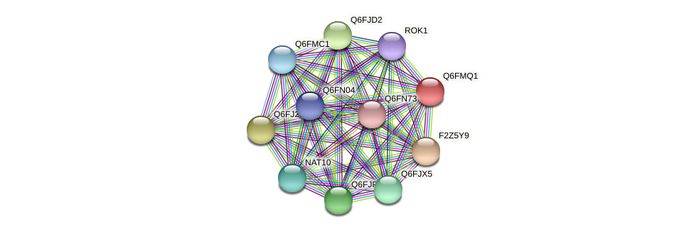 XP_448493.1 protein (Candida glabrata) - STRING interaction network