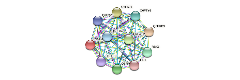 XP_448497.1 protein (Candida glabrata) - STRING interaction network