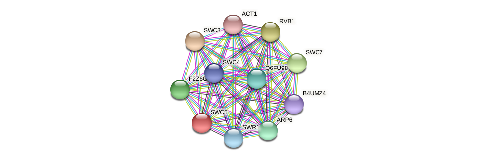 SWC5 protein (Candida glabrata) - STRING interaction network