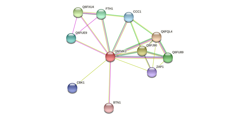 XP_448542.1 protein (Candida glabrata) - STRING interaction network
