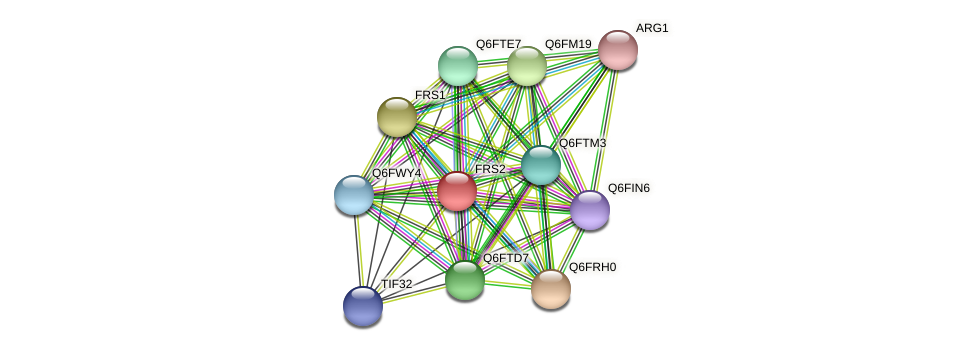 FRS2 protein (Candida glabrata) - STRING interaction network