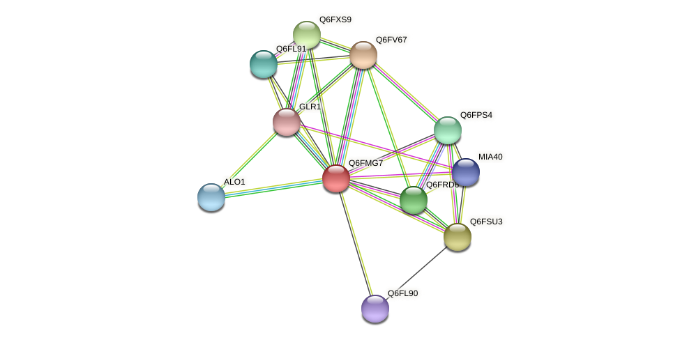 XP_448577.1 protein (Candida glabrata) - STRING interaction network