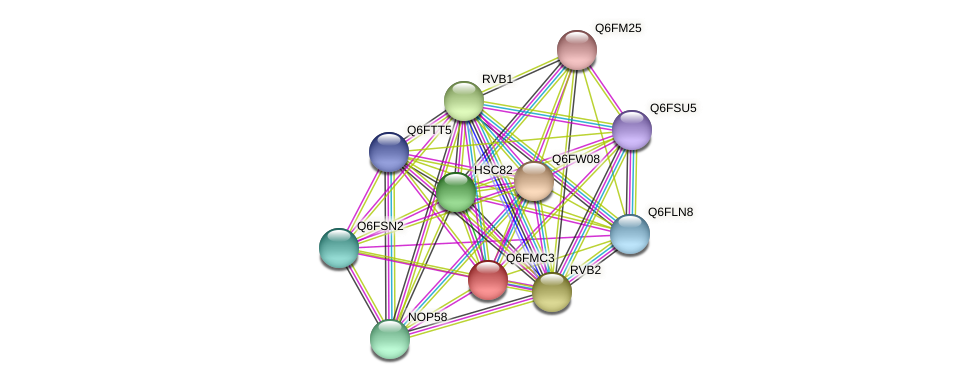 XP_448621.1 protein (Candida glabrata) - STRING interaction network