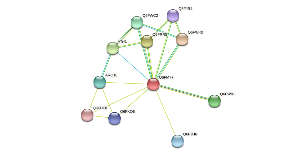XP_448667.1 protein (Candida glabrata) - STRING interaction network