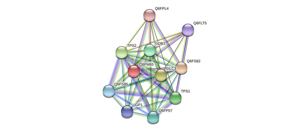 XP_448679.1 protein (Candida glabrata) - STRING interaction network