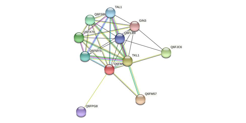 XP_448686.1 protein (Candida glabrata) - STRING interaction network