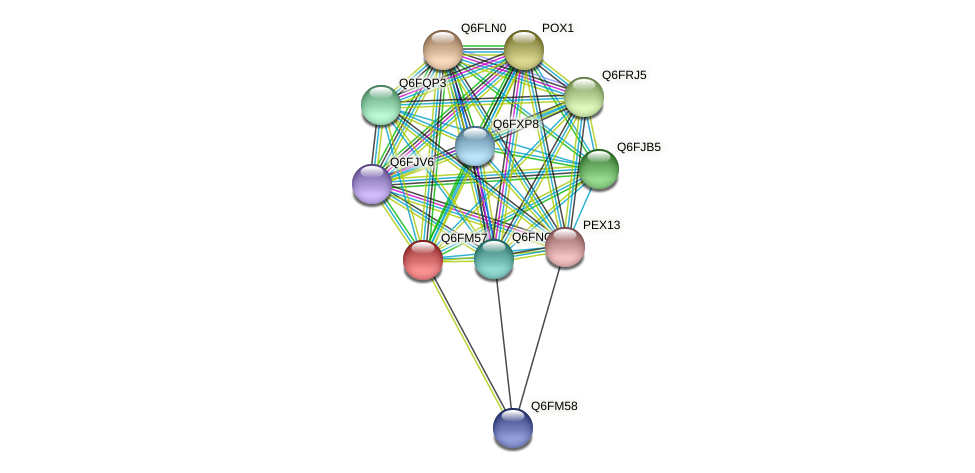 XP_448687.1 protein (Candida glabrata) - STRING interaction network