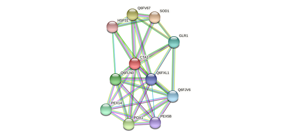 CTA1 protein (Candida glabrata) - STRING interaction network