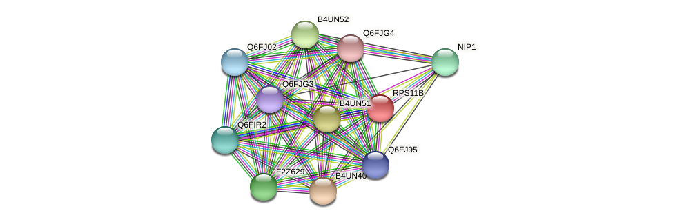 RPS11B protein (Candida glabrata) - STRING interaction network