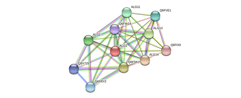 ALG1 protein (Candida glabrata) - STRING interaction network