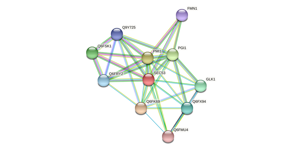 SEC53 protein (Candida glabrata) - STRING interaction network