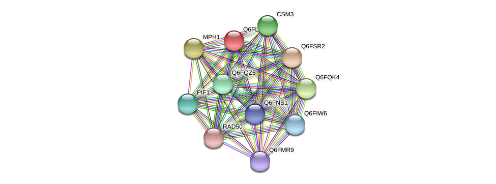 XP_448791.1 protein (Candida glabrata) - STRING interaction network