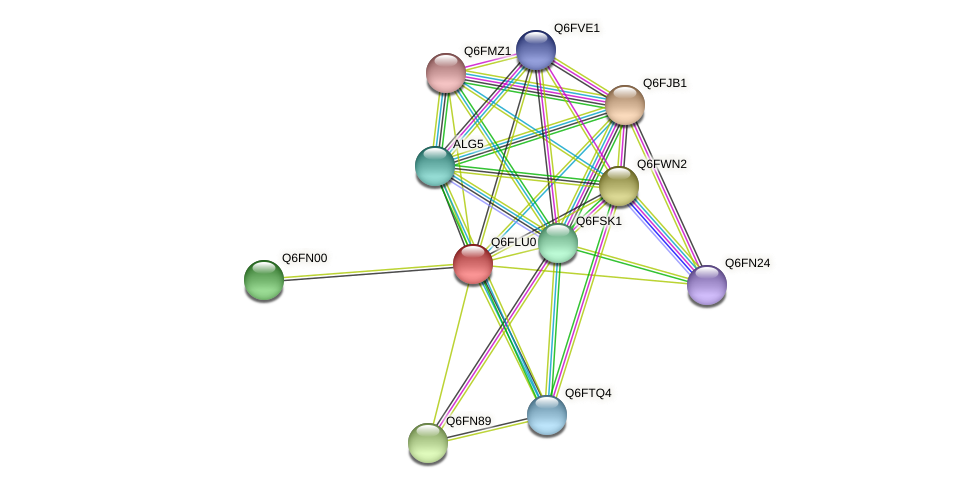 XP_448804.1 protein (Candida glabrata) - STRING interaction network