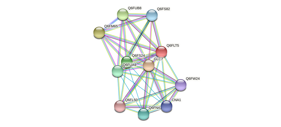 XP_448809.1 protein (Candida glabrata) - STRING interaction network