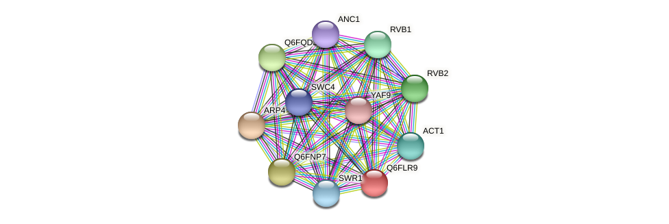 XP_448825.1 protein (Candida glabrata) - STRING interaction network