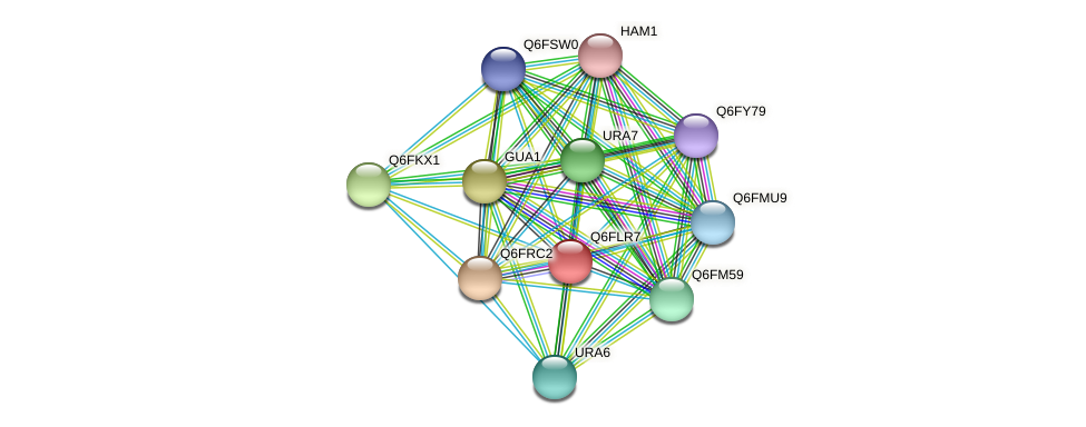 XP_448827.1 protein (Candida glabrata) - STRING interaction network