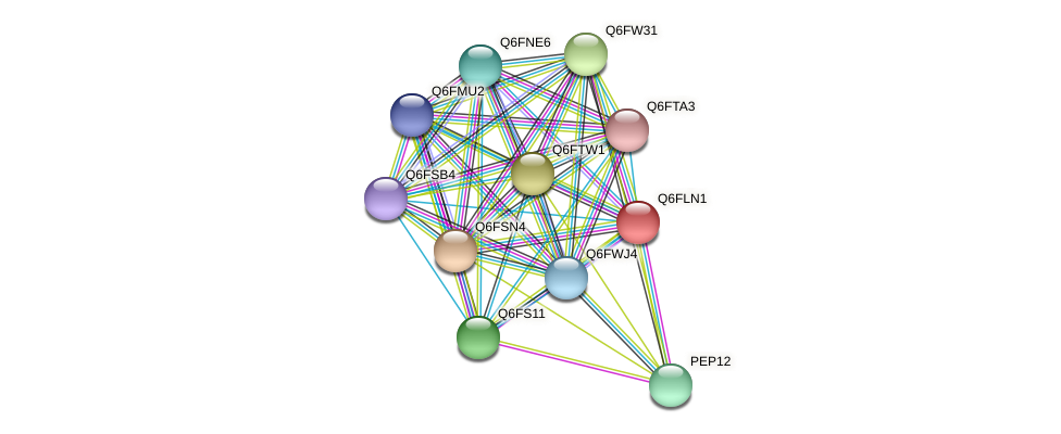 XP_448863.1 protein (Candida glabrata) - STRING interaction network