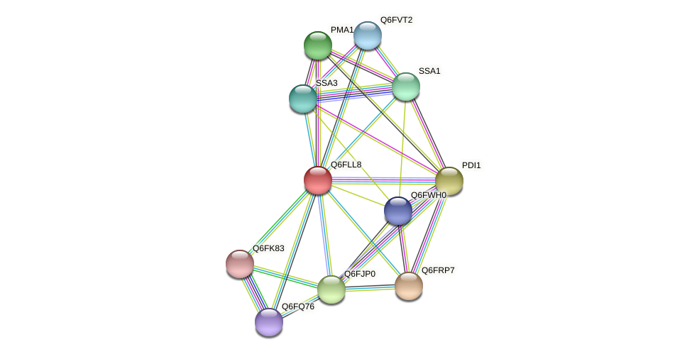 XP_448876.1 protein (Candida glabrata) - STRING interaction network