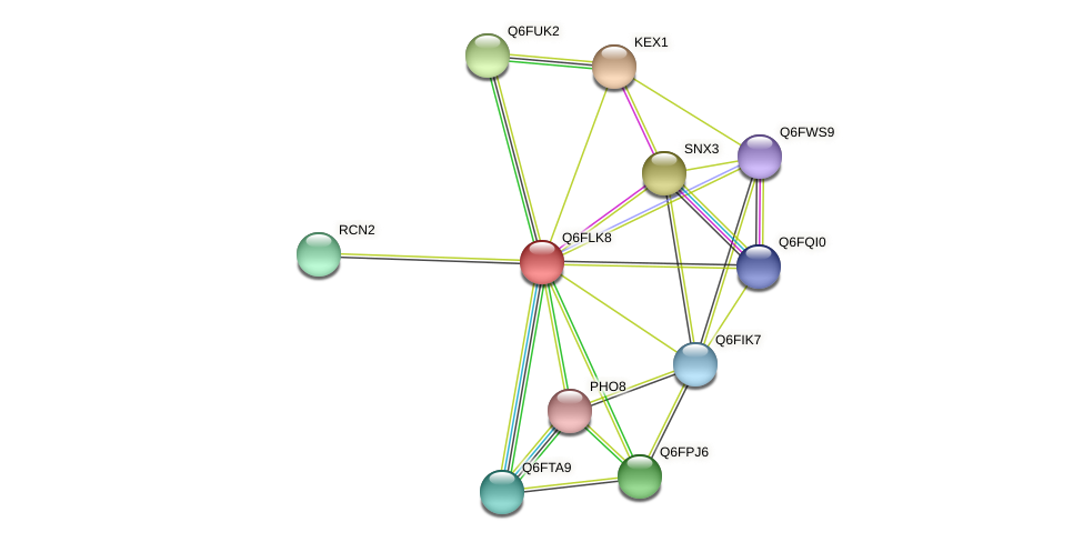 XP_448886.1 protein (Candida glabrata) - STRING interaction network