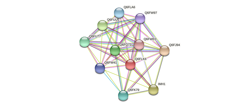 XP_448888.1 protein (Candida glabrata) - STRING interaction network