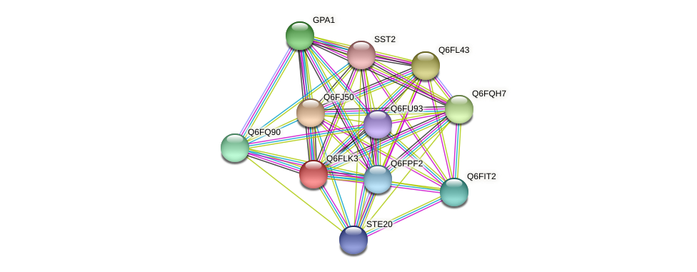 XP_448891.1 protein (Candida glabrata) - STRING interaction network