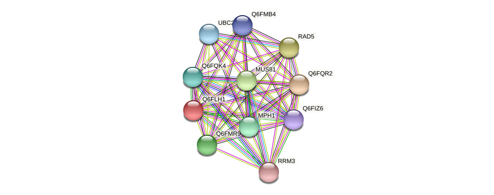 XP_448923.1 protein (Candida glabrata) - STRING interaction network