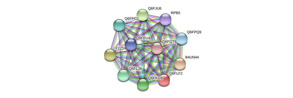 XP_448942.1 protein (Candida glabrata) - STRING interaction network
