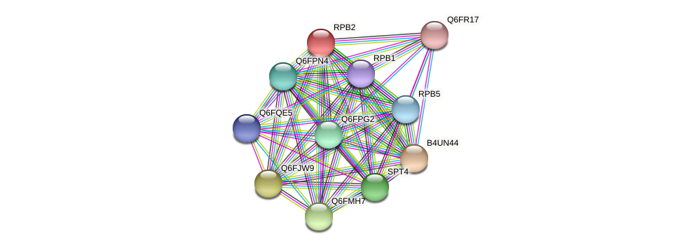 RPB2 protein (Candida glabrata) - STRING interaction network